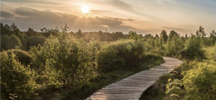Heunec ist klimaneutral – Umweltschutz als Bestandteil der Firmen-DNA